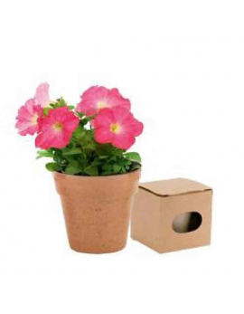Maceta biodegradable petunias